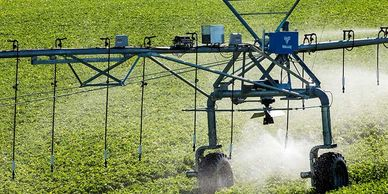 Valley irrigator with drops and sprinklers, spraying a growing field.