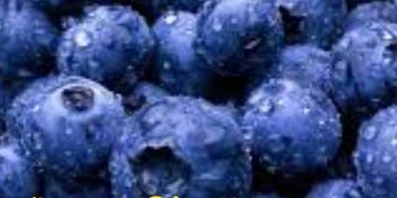 Jazz Blueberries