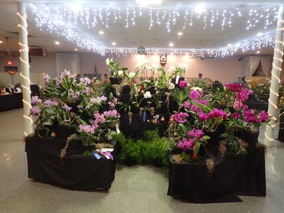 Eastern Iowa Orchid Society displays at regional orchid show throughout the Midwest. This exhibit re