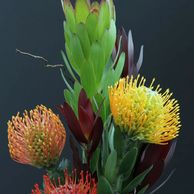 Flower District NYC Wholesale Flowers  Flower Supply Flower Market NYC Protea Pincushion Protea