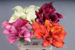 Flower District NYC Wholesale Flowers  Flower Supply Flower Market NYC Calla Lily  Mini Calla Lily