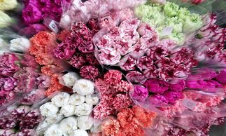 Flower District NYC Wholesale Flowers  Flower Supply Flower Market NYC Carnations Mini Carnations
