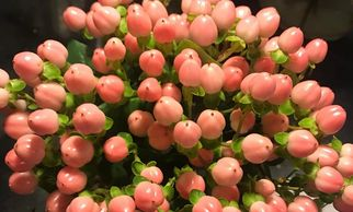 Flower District NYC Wholesale Flowers  Flower Supply Flower Market NYC Hypericum