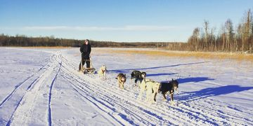 Dogsledding time out on the lake