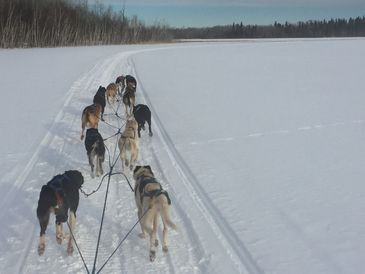 Dogsledding on the land and lakes