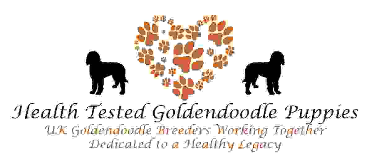Health Tested Goldendoodle Puppies UK