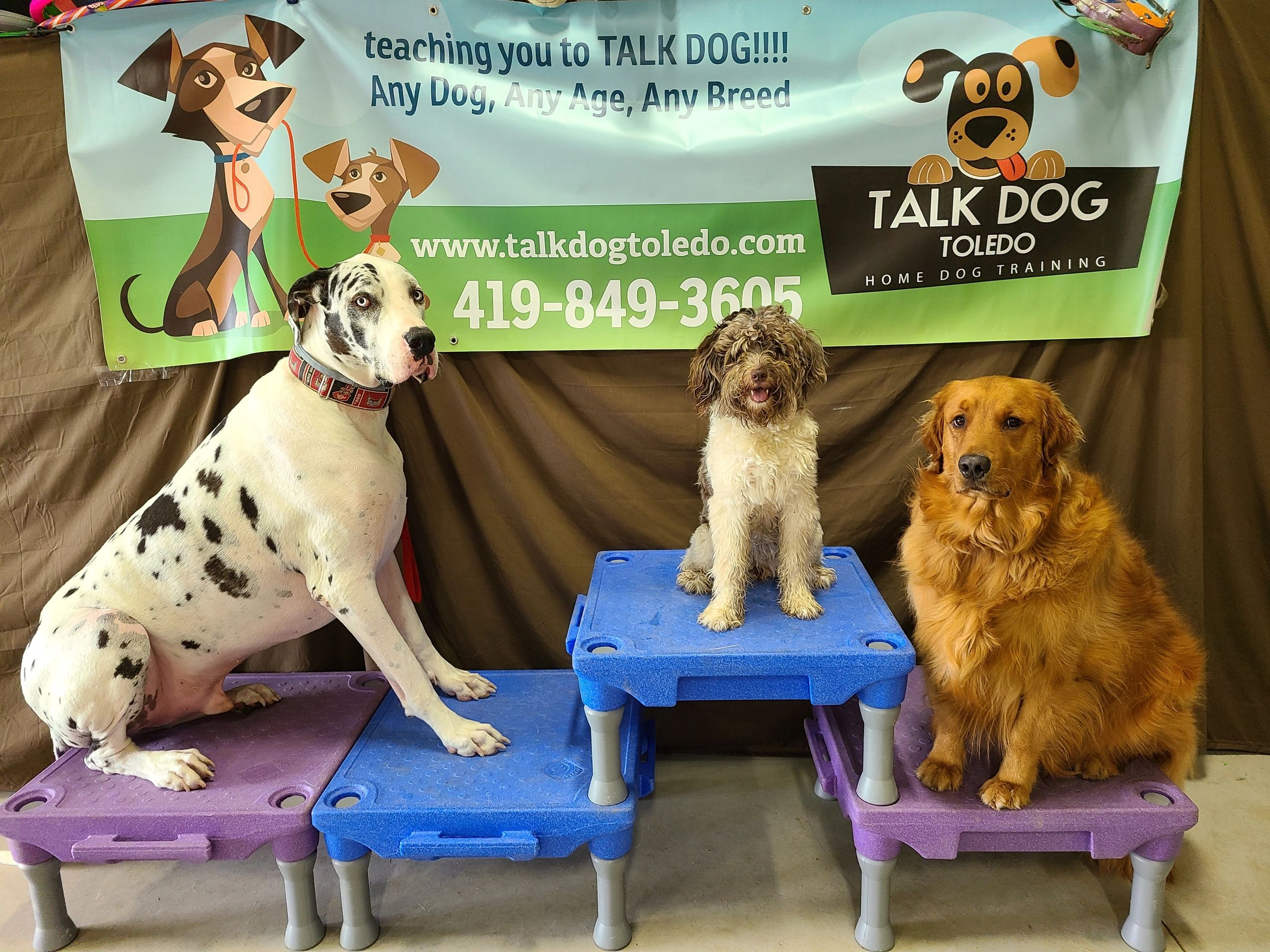 Moose, Penny and Buster at talkdogtoledo