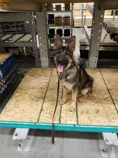 Heidi during her Dream dog program out at Lowes   www.talkdogtoledo.com