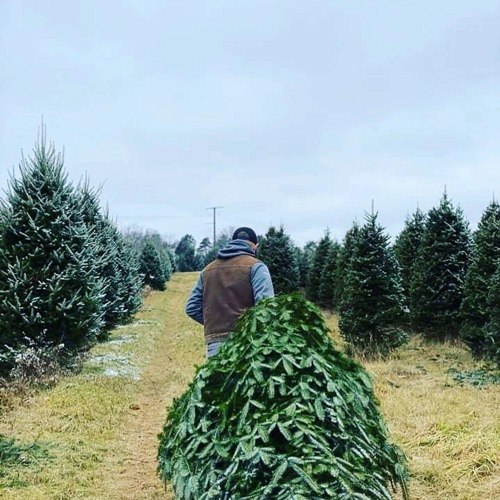 Smokey Hollow Farm Christmas Trees Cut Your Own Tree