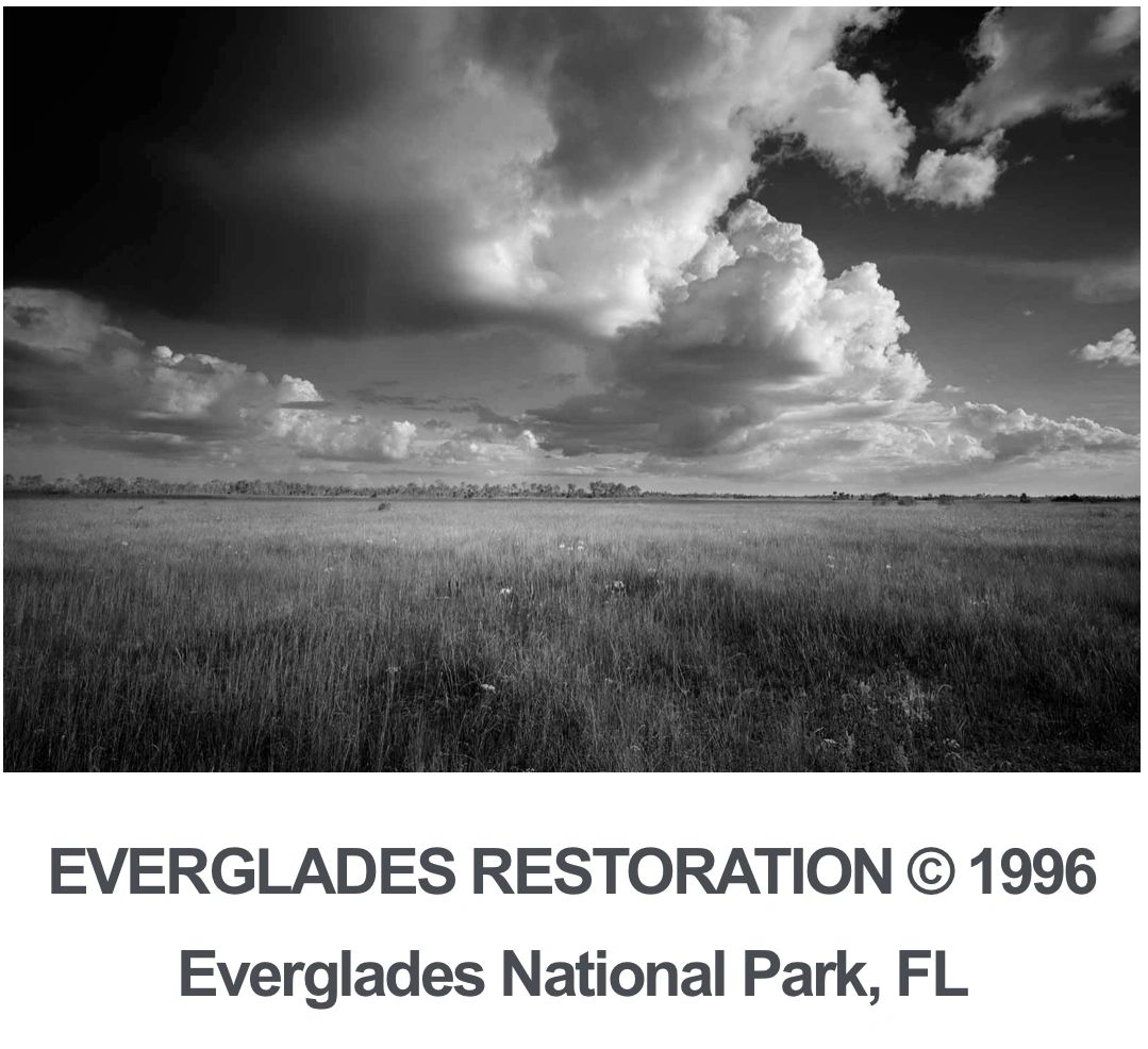 Its been called one of the worlds great biological wonders and since theres nothing quite like everglades national park efforts have been made