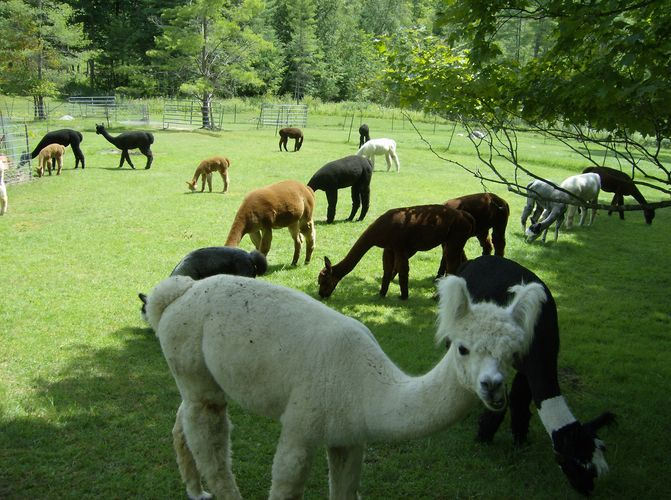 We have handcrafted fiber, yarn, roving, raw fleece, and many other products. You may pet animals