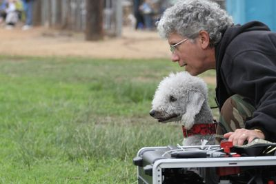 Owner Pat with her Bedlington Terrier, Lucy, getting ready to run