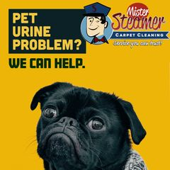 Mister Steamer Carpet Cleaning are experts in urine decontamination.