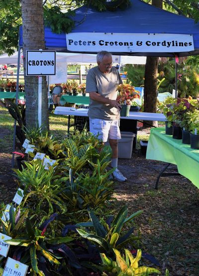 Mark makes final pre-sale adjustments to Crotons and Ti Plants.