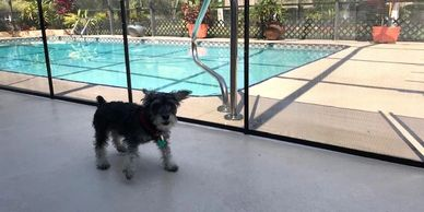 Removable Pet Fence installed in Debary FL by Life Saver Pool Fence of Central Florida 407-365-2400