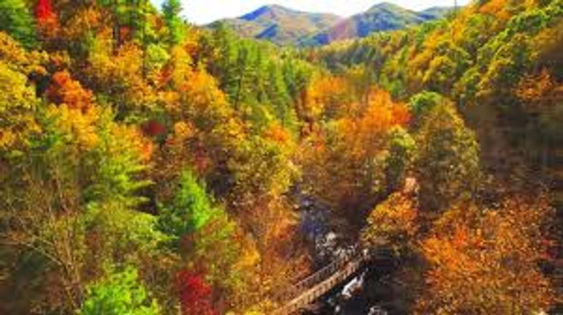 Fall Colors and a trestle on the Virginia Creeper Trail