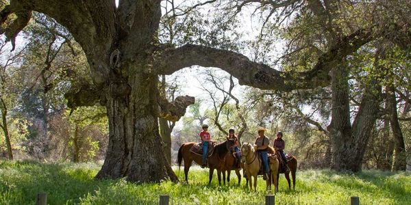 4 horseman next to a giant oak tree on a guided tour through Warner Springs Ranch Resort.