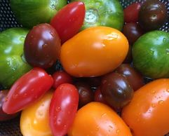 Heritage tomatoes from Wild Country Organics