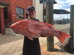 We have one of the best Red Snapper fisheries in the world.  Book a offshore or nearshore trip today