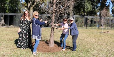 Planting of Redbud tree at Tuscawilla Art Park Ocala