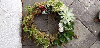 Donna made a wreath with lots  of succulents.