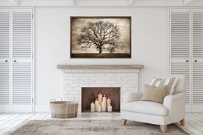 Americana Photography, Oak Tree, Large scale artwork