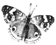 butterfly rubber stamp image