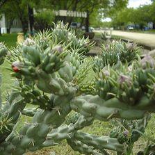 Cactus Country RV Park In San Antonio Texas
