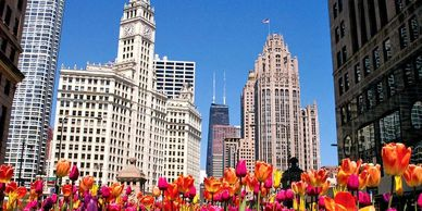 Chicago Private Tours - Wrigley Building