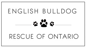 English Bulldog Rescue of Ontario