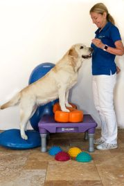dog training, dog obedience, dog fitness