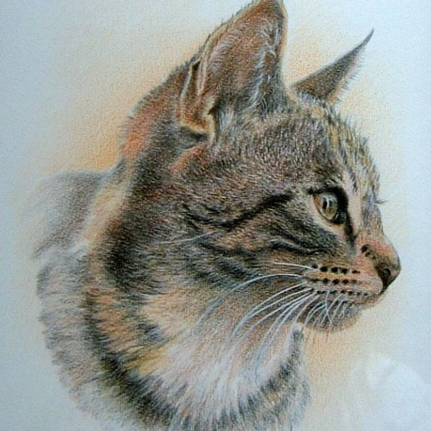 TINY coloured pencil on board