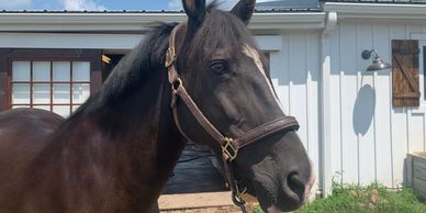 She's a therapy horse healing family relationships, anxiety/depression, grief & loss & Autism