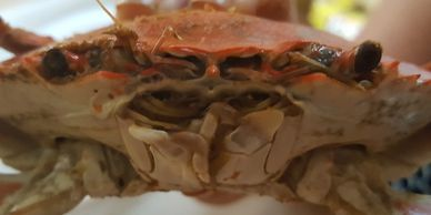 how to eat steamed crabs, how to eat crab legs, steamed crabs, blue crabs, crab boil, crab feasts