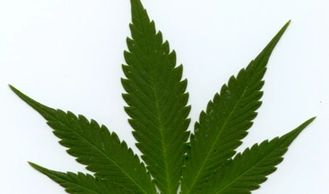 Indica(Shorter span of leaf, thicker stalk)
