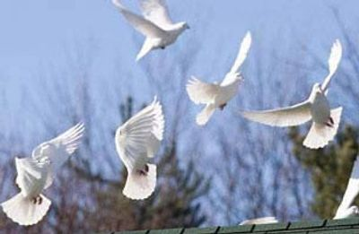 White Bird Flock