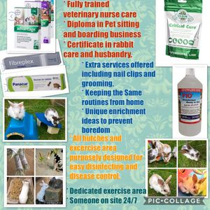 Pet nail clipping, flea and worm treatments, grooming offered here or in your home