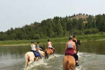 Swimming with horses   Day rides