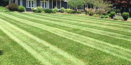 Properly mowed lawn