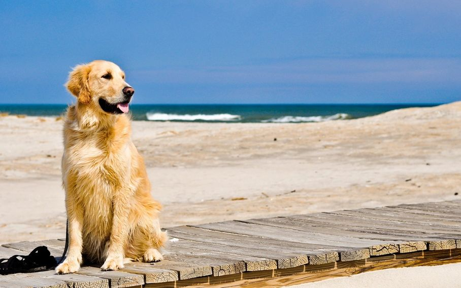 all dogs love the beach