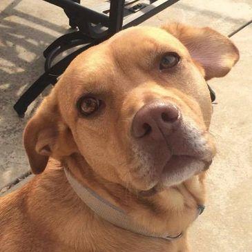 White Oak Animal Safe Haven - Animal Shelter, Animal Rescue