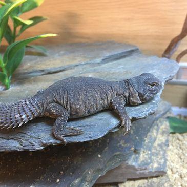DM Reptiles in Plymouth - Reptile Shop,reptile Food,