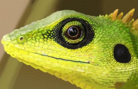 Image of a lizard
