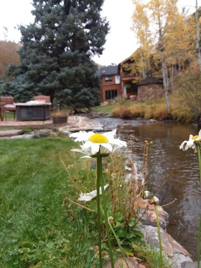 #Landscape maintenance, #Mowing #Weed whacking #Evergreen CO, #Morrison CO, #Ken Caryl, #Littleton