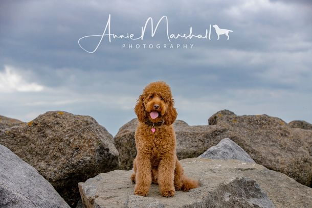 Dog photography kent  pet photography london dog photographer kent dog photographer london kent