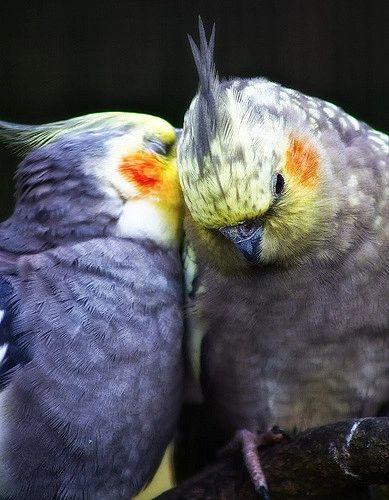 Top 10 Best Talking Parrots