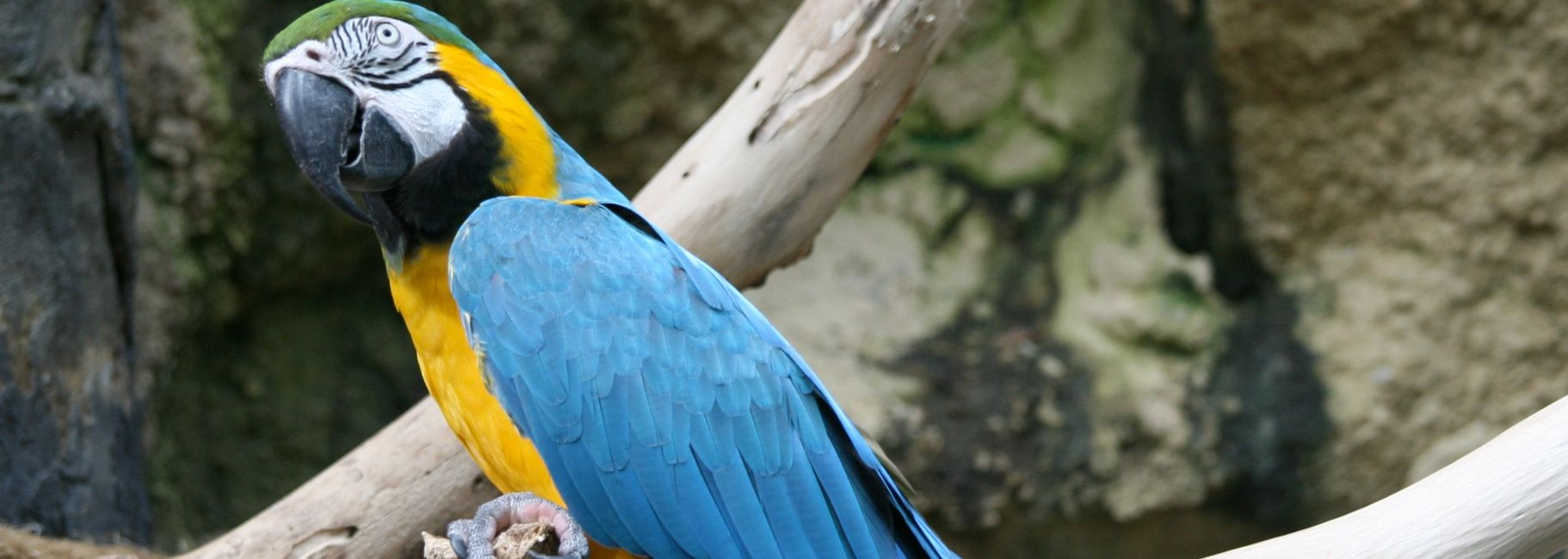 blue and gold macaws for sale in florida