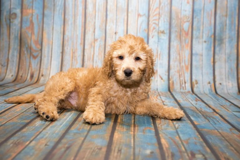 dog grooming, dog grooming cannock, dog grooming in my area, pets at home, jollys, fido and pooch