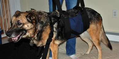 Large Get-a-Grip Harness for helping older, weak, or arthritic dogs overcome mobility challenges. Help Em Up and out, up and down stairs, and into your car.