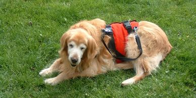 No need to crouch or strain your back while you help your geriatric dog outside or up a ramp, with an AST Suit. Each Support Suit dog harness comes with a set of clip on adjustable handles.